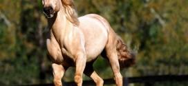 حکایت مرد و اسب اصیل