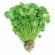 ارزش غذایی سبزی شاهی