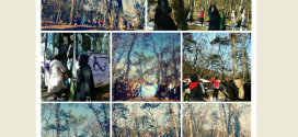 یوگا در دل جنگل