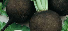 سنگ های صفراوی را با مصرف ترب سیاه رفع کنید
