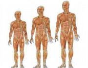 ۴توصیه اصلی برای افزایش قد