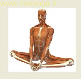 حرکات مناسب یوگا برای تقویت سیستم ایمنی بدن