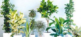 گیاهانی که هوا را تصفیه می کنند بشناسید